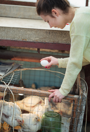 henhouse: Young farmer girl collecting domestic chicken eggs in her hand with henhouse on the background. This natural food ingredient is very important in farm household Stock Photo
