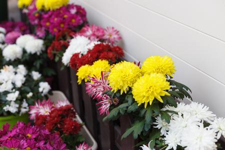 flowerpots: Different decorative flowers in flowerpots outdoors.