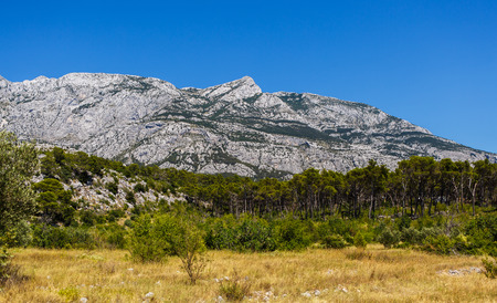 Beautiful mountain Biokovo under vibrant blue sky.High rocky mountains in Croatia.Awesome landscape wallpaper.Green trees and yellow field on foreground Stock Photo