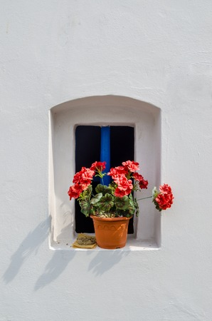 anthesis: Pink flower in small blue windows with white wall Stock Photo