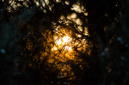 dark forest: Nice colorful sunset over bush in dark forest