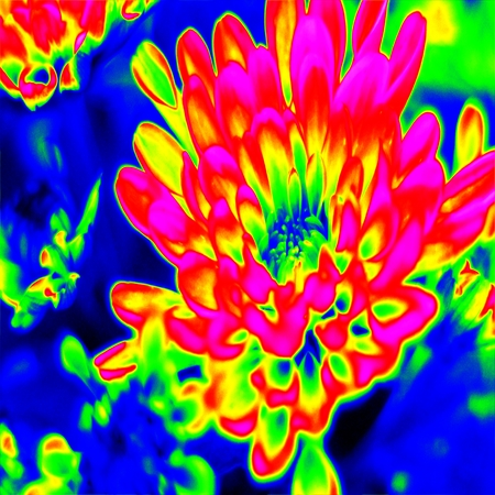 thermogram: Infrared macro flower Stock Photo