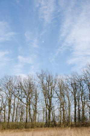 Herfst boom met blauwe hemel in een weide