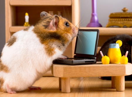 Business hamster check email Stock Photo - 37907157