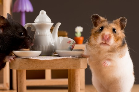 cute hamster: hamster drinking coffee Stock Photo