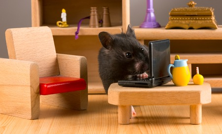 cute hamster: Business hamster check email Stock Photo