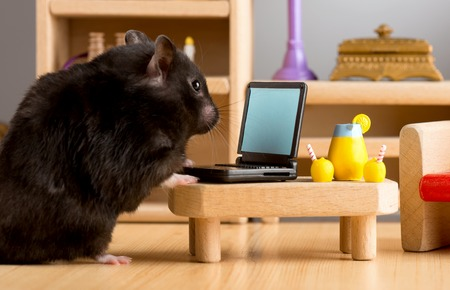 Business hamster check email Stock Photo