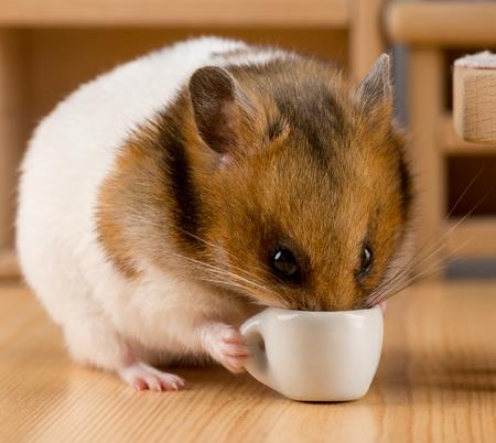 hamster drinking coffee Reklamní fotografie
