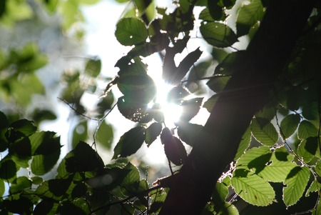 The suns rays through the branches photo
