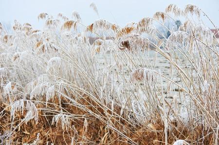 frio: frío invierno  Foto de archivo