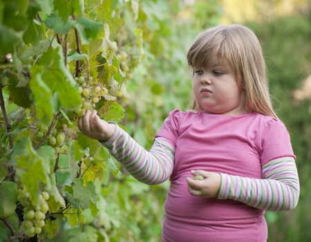 girl picked grapes in the winery