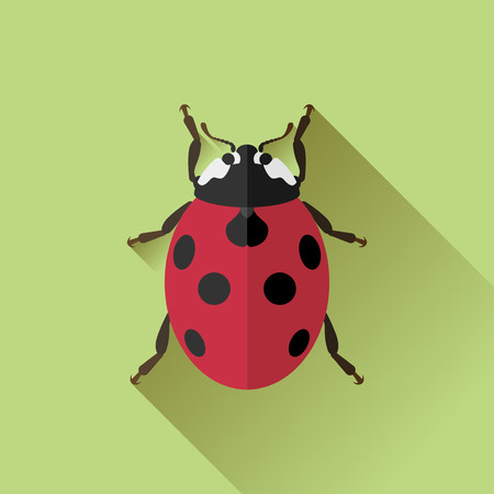 Vector Long Shadow Flat Ladybug Bug Insect