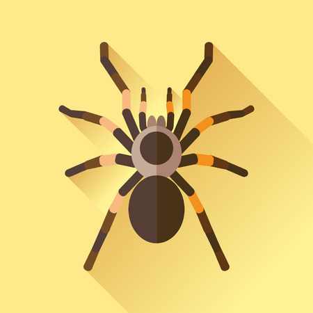 tarantula: Vector Long Shadow Flat Spider Tarantola Insect Illustration