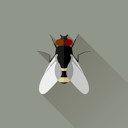 musca domestica: Vector Long Shadow Flat Fly Bug Insect Illustration