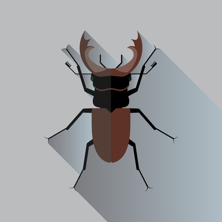 stag beetle: Vector Long Shadow Stag Beetle Bug Insect