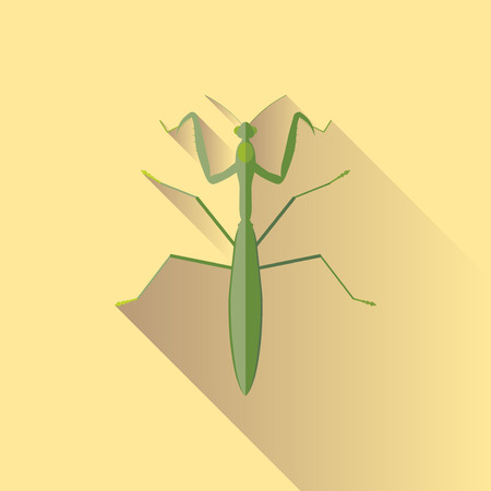 Vector Long Shadow Praying Mantis Bug Insect
