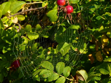 Spiderweb photo