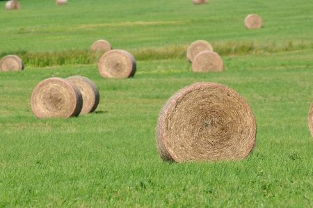 Hay bundles  photo