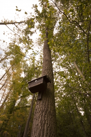 Birdhouse on tree  photo