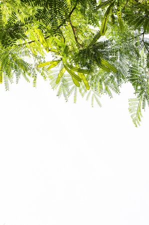 appendage: branch on white background, green leaf isolate. Stock Photo