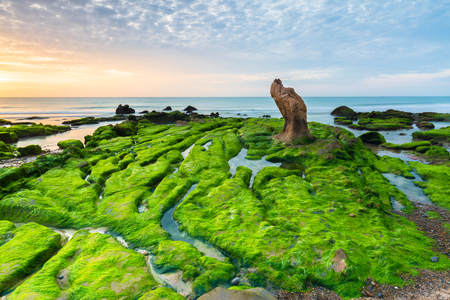 Strange rocks and moss in Co Thach beach 写真素材