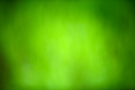close-up of green grass, very shallow focus   photo