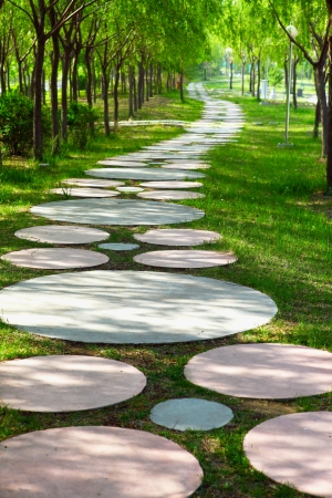 pathway in green forest  photo