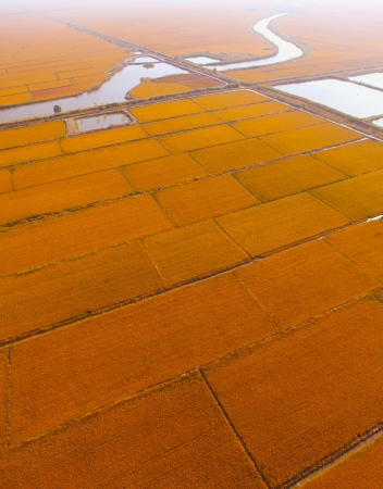cropland: Aerial view of farmland