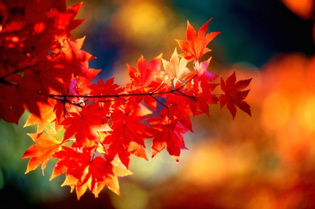 Fall leaves Stock Photo - 16483284