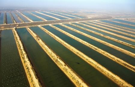 Aquaculture, seafood