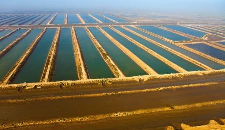 Aquakultur, Meeresfrüchte