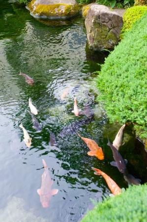 garden  Stock Photo - 17375895