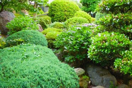 garden  Stock Photo - 17375897