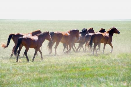 herd of wild horses running on the field Stock Photo - 17727238