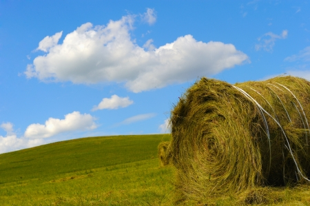 Hay bales  photo