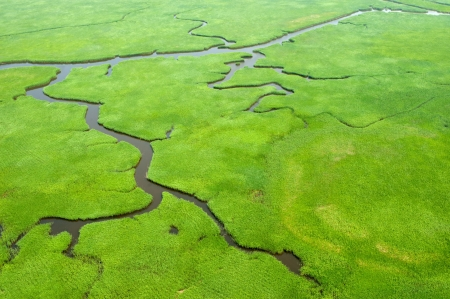 wetlands: Aerial view of lush coastal wetlands  Stock Photo