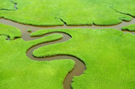 aerial: Aerial view of lush coastal wetlands  Stock Photo