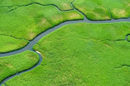 Aerial view of lush coastal wetlands  Stock Photo