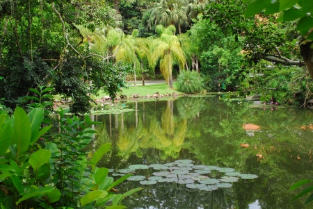 tropical lake with palm and water lilies  photo
