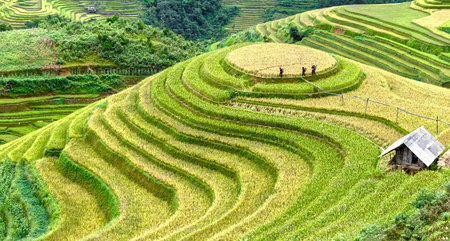 terracing: Yen Bai, Vietnam - September 24th, 2015: Group farmers go on the levee of terraced fields home in the afternoon after a day of work in Mu Cang Chai, Yen Bai, Vietnam Editorial