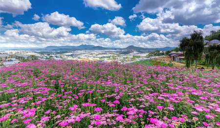 Highland Park Dalat Flower on a sunny morning, hilltop village Immense flower field far away from the high which areas, cheerful and wanted this flower garden is always watching. Standard-Bild