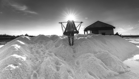 hon: Khanh Hoa, Vietnam, June 30, 2015: Farmers are pouring salt salt pile of salt v?o Afternoons Jimmy khi summer sun on the top of Hon Khoi across salt field, Khanh Hoa, Vietnam Stock Photo