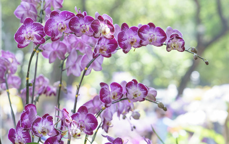 spa still life: Phalaenopsis orchids bloom in spring flowers adorn the beauty of nature