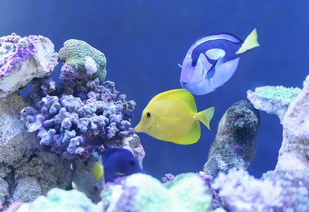 Fish swims in the water, very lively and beautiful underwater life, indoor aquarium for People often Do feng shui due