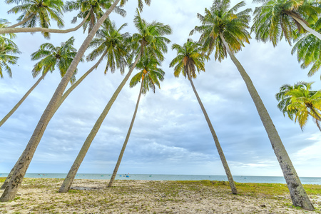Tropical beach with coconut palm. This is the place for vacation vacation with family Paradise beach