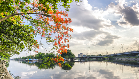Scenic river dock in the suburbs with red boughs of the poinciana flower adorn the peaceful countryside as the sun goes down.