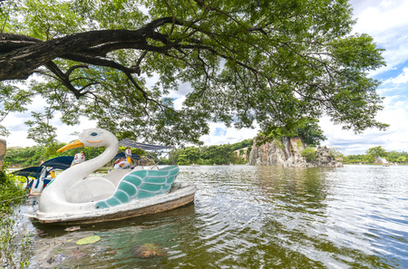 Swan boat landing in the lake next to the shade of a very ancient tree Standard-Bild