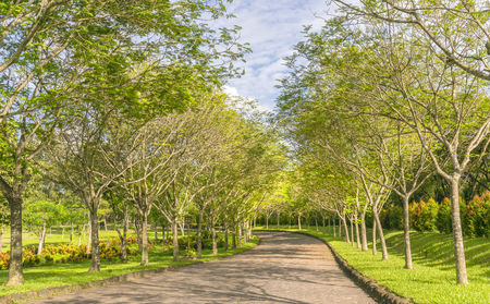 Twisting roads in the park with green trees shine in the golden sunshine of the summer in the ecotourism to attract tourists visiting the weekend.