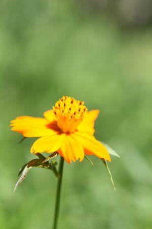 yelllow: yelllow flower