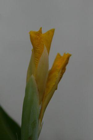 nicety: yellow flower Stock Photo